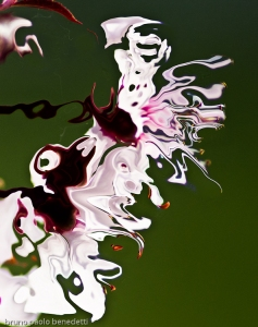 non objective photography:white fluid shape with light pink shades and brown spots