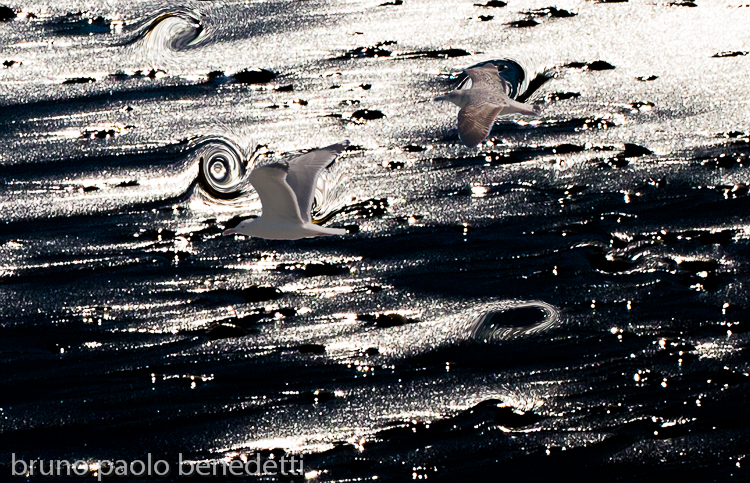 two seagulls flying on light reflections on dark background
